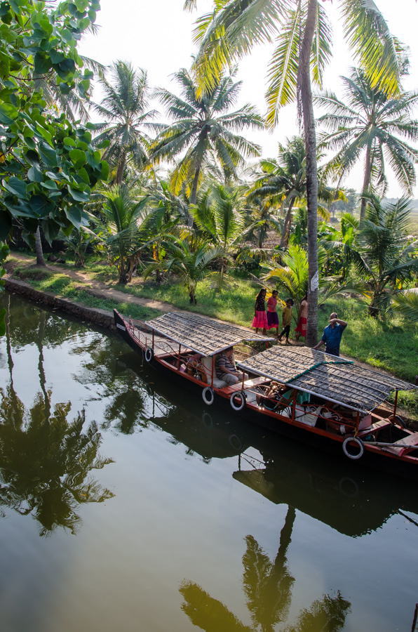Palmen Kerala Indien