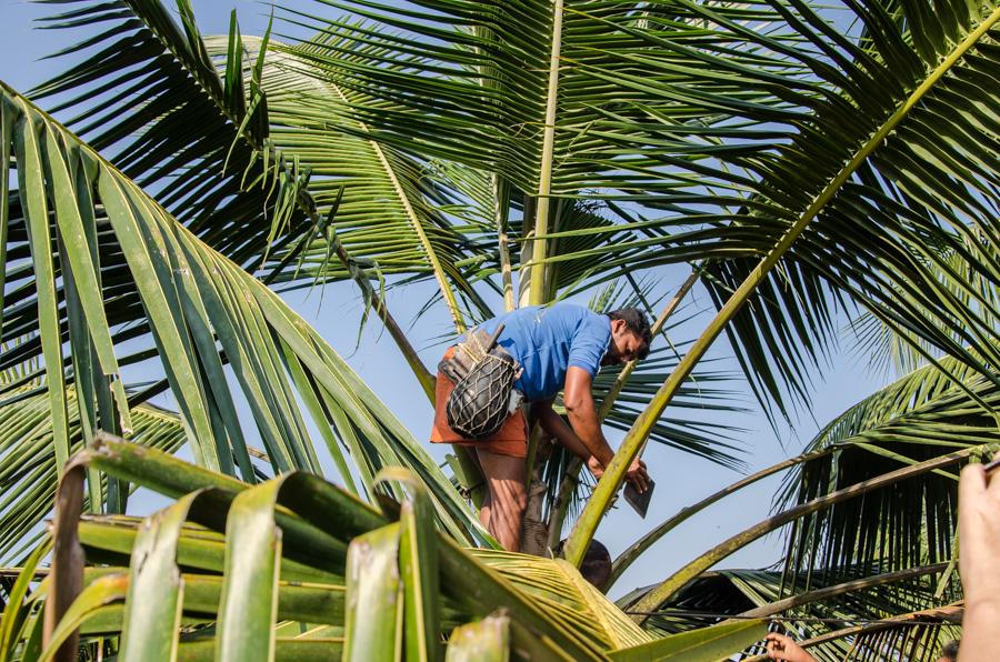 Palmwein Kerala