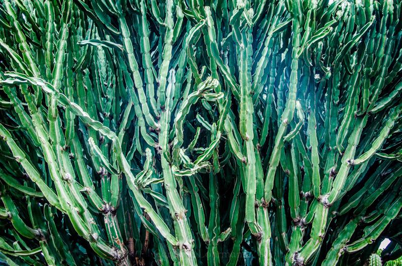 kaktuswald lanzarote