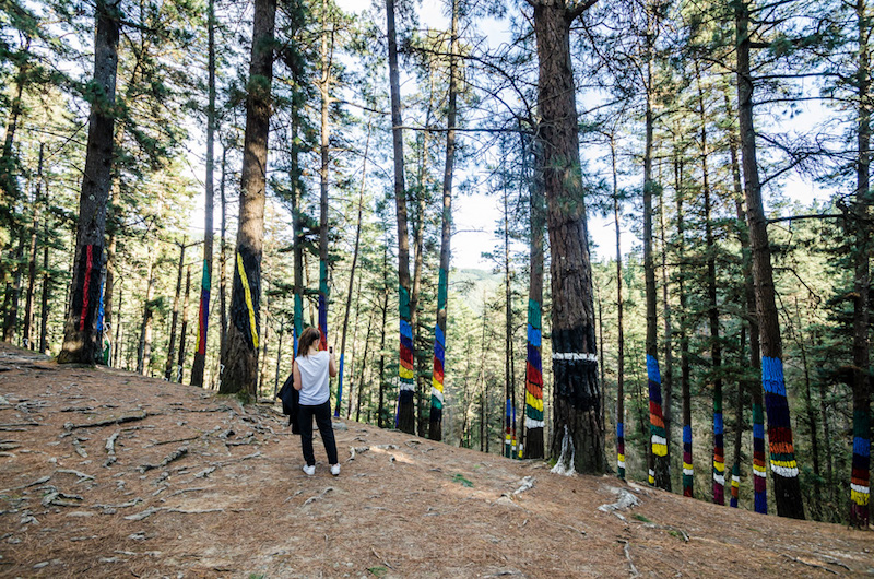 bosque pintado baskenland