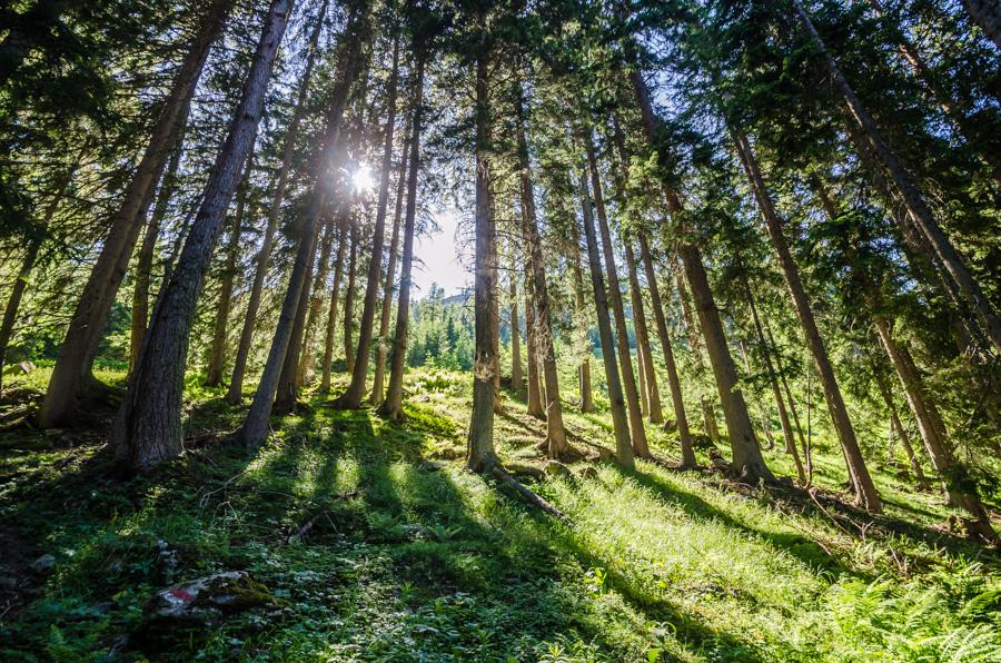 Wald Lungau