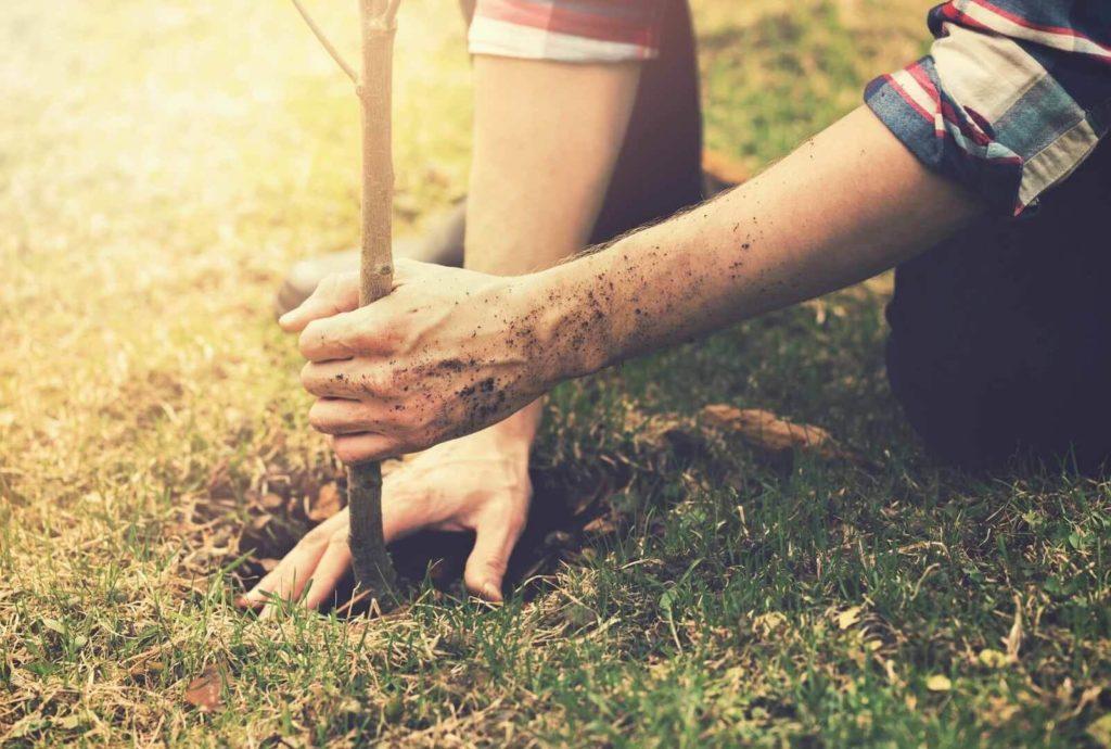 Baum adoptieren