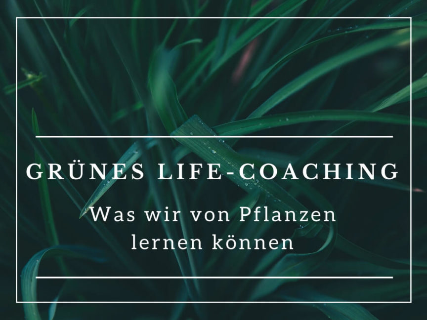 Gruenes Life Coaching