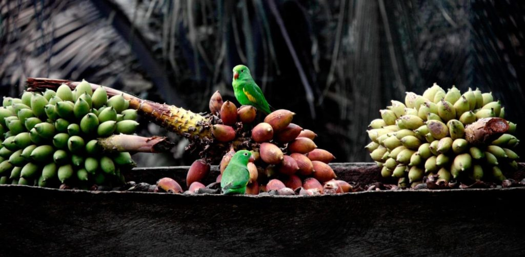 Bananenarten